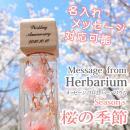 ハーバリウム 桜の季節