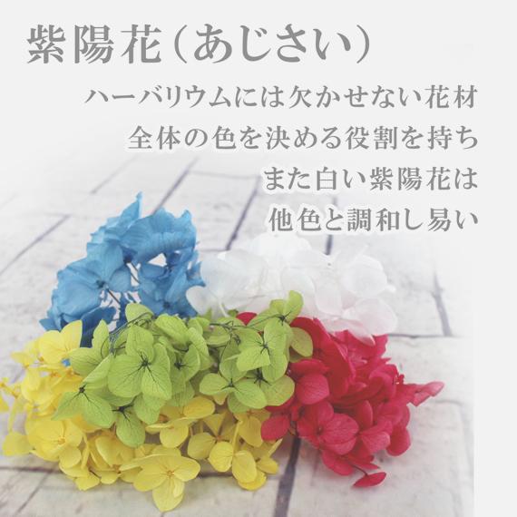 あじさい(紫陽花)
