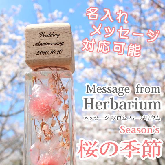 ハーバリウム,植物標本 桜 春