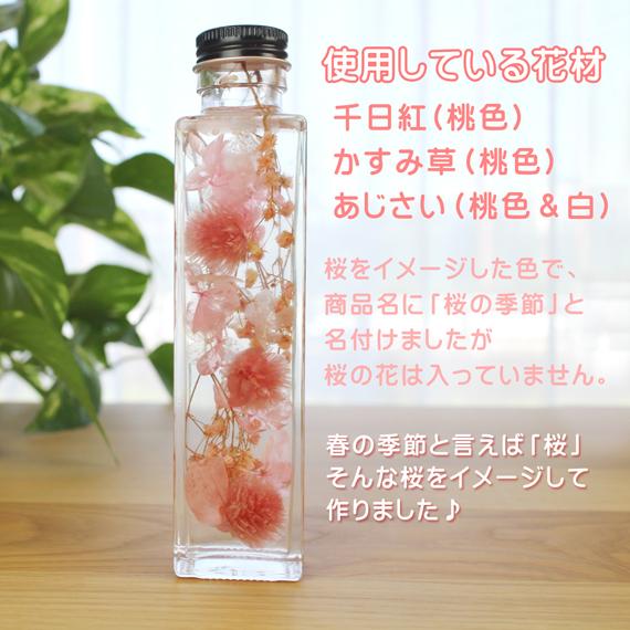 ハーバリウム 桜 春